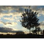 Herbst-Impressionen-07-014.jpg