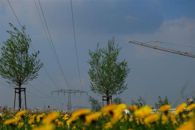 2010-04-30_28.JPG