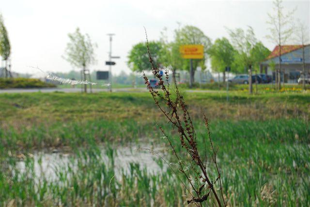 2010-04-30_31.JPG